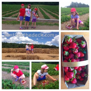 Strawberry picking with my child with autism